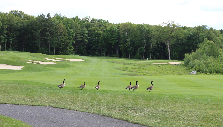 probonogolf2015-159-2-golf-course-image-1
